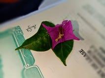 Deux feuilles sont une fleur photos stock