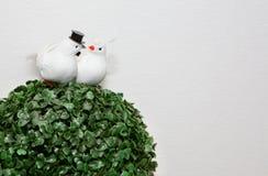 Deux figures colombes blanches sur un arbre Photos stock