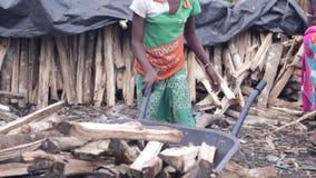 Deux filles recueillant le bois de chauffage banque de vidéos