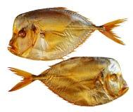 Deux fishies de lune d'isolement sur le blanc Photo stock
