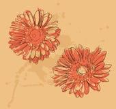 Deux fleurs Image stock