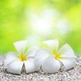 Deux fleurs blanches Photo libre de droits
