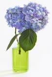 Deux fleurs de Hydrangea dans le vase vert sur le blanc Photos libres de droits