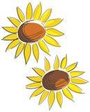 Deux fleurs du soleil Image libre de droits