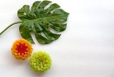 Deux fleurs et ensembles de feuille Photo libre de droits