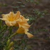 Deux fleurs jaunes Images stock