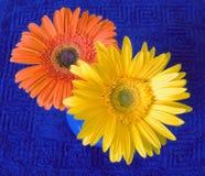 Deux fleurs lumineuses Photo libre de droits