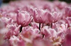Deux fleurs parmi la mer de d'autres Photographie stock
