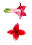 Deux fleurs roses Photographie stock libre de droits