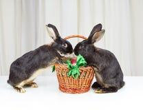 Deux forepaws de lapins sont basés sur un panier avec des oeufs de pâques Photographie stock