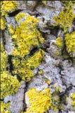 Deux fourmis sur l'écorce photos stock