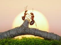 Deux fourmis sur le coucher du soleil Image libre de droits