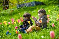 Deux frères s'asseyant dans un domaine des tulipes Photos stock