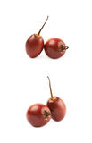 Deux fruits de tamarillo d'isolement Image libre de droits
