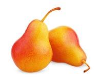 Deux fruits jaunes rouges mûrs de poire Photographie stock libre de droits