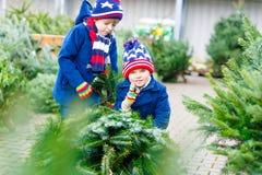 Deux garçons de petit enfant achetant l'arbre de Noël dans la boutique extérieure Photographie stock