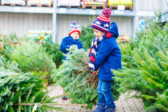Deux garçons de petit enfant achetant l'arbre de Noël dans la boutique extérieure Photos libres de droits