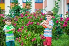 Deux garçons de petit enfant arrosant des roses avec la boîte dans le jardin Famille, jardin, faisant du jardinage, mode de vie Photos libres de droits