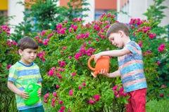 Deux garçons de petit enfant arrosant des roses avec la boîte dans le jardin Famille, jardin, faisant du jardinage, mode de vie Photo libre de droits