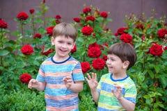 Deux garçons de petit enfant arrosant des roses avec la boîte dans le jardin Famille, jardin, faisant du jardinage, mode de vie Photo stock