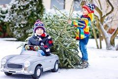 Deux garçons de petit enfant conduisant la voiture de jouet avec l'arbre de Noël Image stock