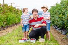 Deux garçons et père de petit enfant ayant l'amusement à la ferme de framboise Photos stock
