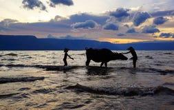 Deux garçons indonésiens lavant leur vache avec de l'eau océan pour nettoyer leur vache au coucher du soleil dans l'océan Photographie stock libre de droits