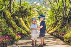 Deux garçons, un voyageur au Vietnam contre le contexte des chapeaux vietnamiens Images stock