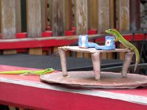 Deux geckos à l'heure du thé image libre de droits