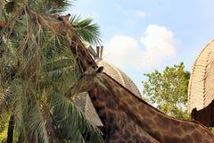 Deux girafes dans un zoo ou un parc d'air ouvert images stock