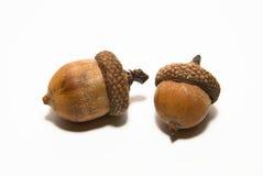Deux glands avec des chapeaux dessus au-dessus de blanc Image stock