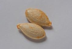 Deux graines de citrouille sur le fond blanc Photos stock