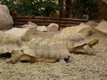 Deux grandes tortues Images libres de droits