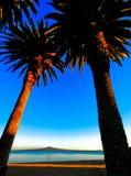 Deux grands arbres de plam avec la plage à l'arrière-plan Photo stock