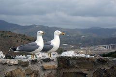Deux grands michahellis méditerranéens de Larus de mouettes se tiennent sur le mur en pierre de la vieille forteresse contre le c photo stock