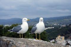 Deux grands michahellis méditerranéens de Larus de mouettes se tiennent sur le mur en pierre de la vieille forteresse contre le c photos libres de droits
