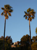 Deux grands palmiers par coucher du soleil image libre de droits