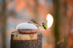 Deux grands titans volent vers un morceau des graines dans la neige Images libres de droits