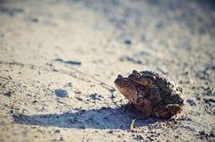 Deux grenouilles Photographie stock