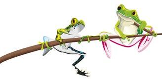 Deux grenouilles sur la branche d'arbre Photo libre de droits