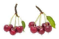Deux groupes de merises humides Avium de Prunus image libre de droits