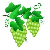 Deux groupes de raisins verts avec des feuilles d'isolement sur le backgrou blanc illustration libre de droits