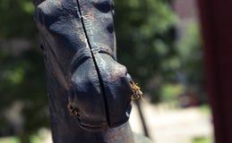 Deux guêpes se reposant sur une statue de cheval Images stock