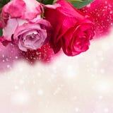 Deux hauts étroits de fleurs roses Photographie stock libre de droits
