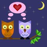 Deux hiboux dans l'amour se reposant sur une branche d'arbre dans le ciel nocturne Image stock