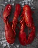 Deux homards cuits à la vapeur du Maine sur la glace Photos stock