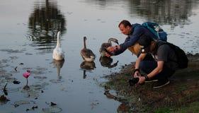 Deux hommes prennent des photos des fleurs de lotus sur un étang Les touristes font des photos de belles usines image libre de droits
