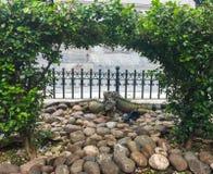 Deux iguanes de perruche au parc de Seminario, Guayaquil Equateur Photos stock