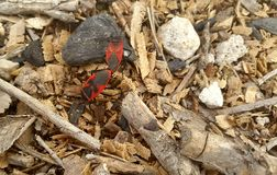 Deux insectes image stock