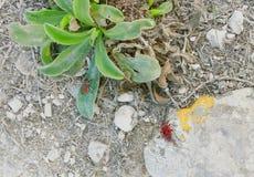 Deux insectes de feu 2 photographie stock